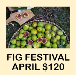 Fig Festival Week 2: April 2021