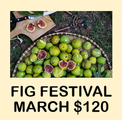 Fig Festival Week 1: March 2021